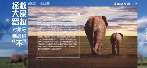 带来好运的微信头像大象图片